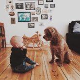 Baby und Hund zuhause