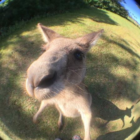 australien-reise-6