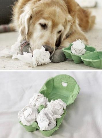 Hundespiel 1